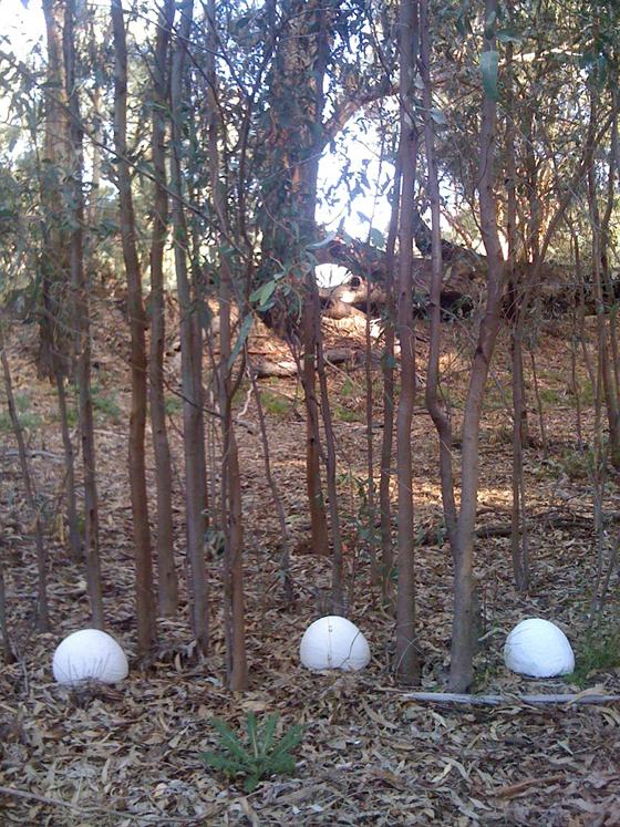 Kopi in the Bush