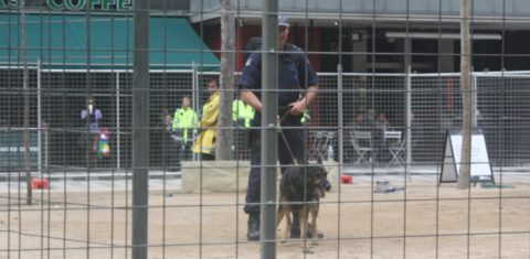 An attack dog guards city square