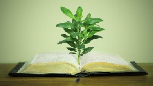 Genesis 1:26-28 and Environmental Rights - Right Now