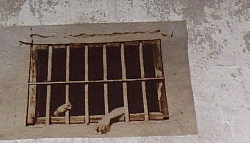 Rusty bars across a window