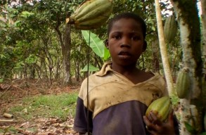 Child Cocoa Bean chocolate