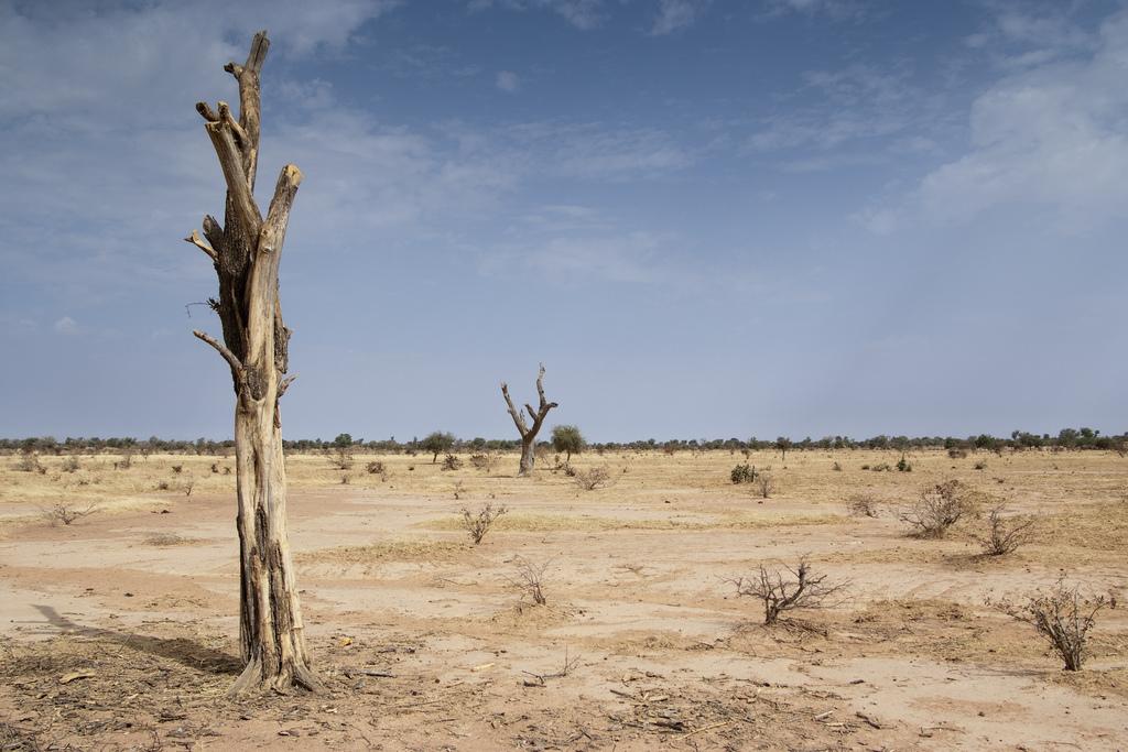 gozer desert information