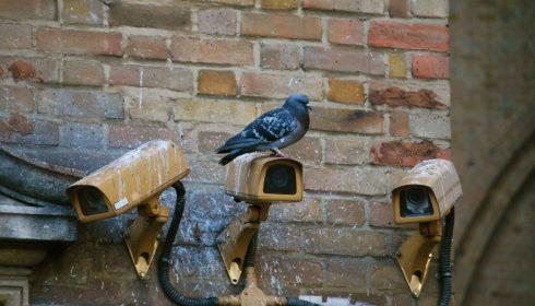 cctv pigeons privacy