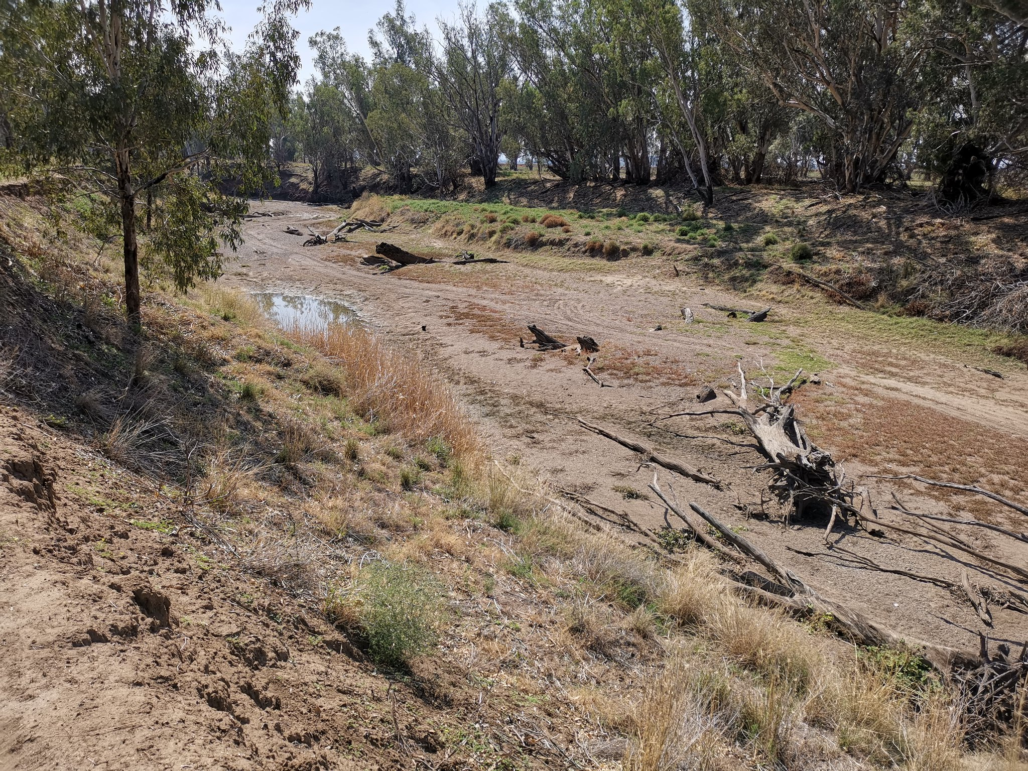 This section of the Namoi River, south of Boggabri, was dry. You can see that a motor vehicle has driven along the riverbed. Photo credit: Michael Cleary/flickr
